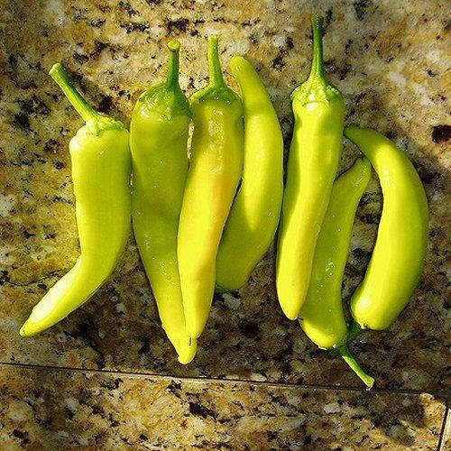 Hungarian Pepper Seeds YELLOW WAX HOT