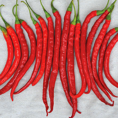 Cayyenne Pepper Seeds HOT PEPPER