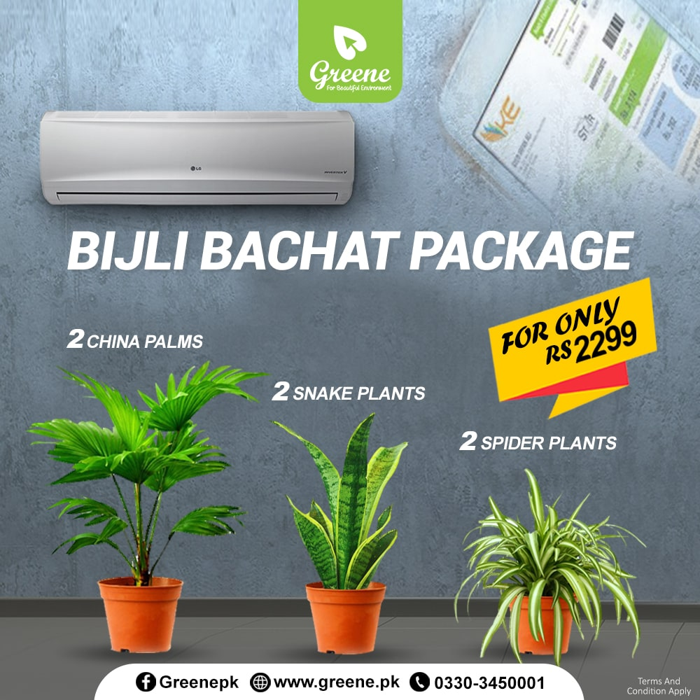 Bijli Bachat Package